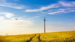 Plane over yellow rape field Royalty Free Stock Photo