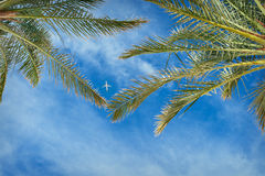 Plane in the sky between the leaves of palm trees Royalty Free Stock Photography