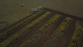 The plane stands in a young forest. Shot on drone stock footage