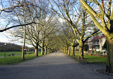 Plane-tree alley Stock Photography