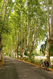 Plane tree alley with bicycle, Provence Royalty Free Stock Photos