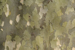 Plane Tree Bark Stock Photos