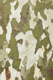 Plane tree bark close up Stock Photos