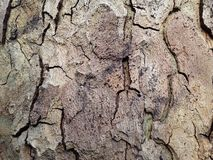 Plane tree bark royalty free stock photography