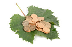 Plane tree leaf and coins Royalty Free Stock Image