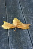 Plane tree leaf on wood deck Royalty Free Stock Images