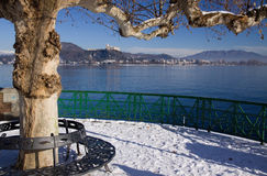 Plane tree on Maggiore lake Stock Photography