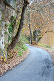 Plane tree pathway Royalty Free Stock Images