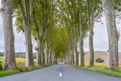 Plane Trees France. Plane trees (Platanus × acerifolia) along tree-lined highway, Tarn Department, Midi-Pyrénées, France royalty free stock photography