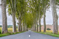 Plane Trees France Royalty Free Stock Photography