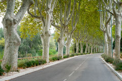 Plane Trees France. Rows of Plane trees along a road, Gard Department, Languedoc-Roussillon, France royalty free stock photo