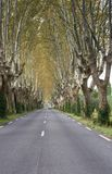 Plane Trees Lining a Country Road Stock Photo