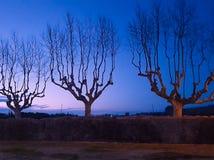 Plane trees. Cabanes, Girona, Catalonia stock photos