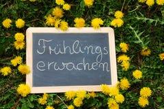 Planen Sie das Lügen im Gras mit Löwenzahn und den Buchstaben Fruehlingserwachen Stockbild