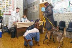planerad inympning för hundhus royaltyfri fotografi