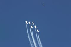 Planes and hawk. Planes stream skyward as a hawk observes Stock Images