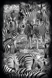 Planes Zebra - Etosha National Park - Namibia Royalty Free Stock Photography