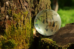 Planet. Glass planet in a tree with moss Stock Photos