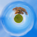 Planet of alone orange autumn tree on a green field Royalty Free Stock Photography