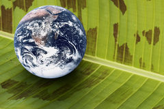 Planet Earth on Banana Leaf. Image of planet earth with banana leaf portraying a living earth Royalty Free Stock Image