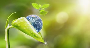 Planet earth with beautiful freshness growth tree. Planet earth with beautiful freshness growth tree and drop of water holed by new growth plant on outdoor royalty free stock photos