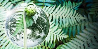 Planet earth with beautiful freshness growth tree fern. Planet earth with beautiful freshness growth tree fern and drop of water on outdoor summer fern forest royalty free stock image