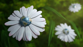 Planet Earth Daisy Royalty Free Stock Photography