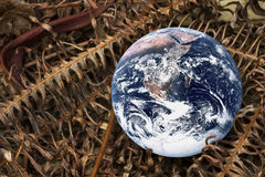Planet Earth with Dried Ferns. Image of planet earth with dried fern portraying a dying earth Royalty Free Stock Photos