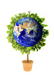 Planet Earth Eco Plant. A planet earth growing tree or plant symbolizing environmental concerns and ecology royalty free stock images