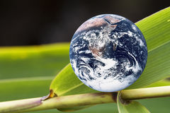 Planet Earth on Green Bamboo Leaf. Image of planet earth with green bamboo leaves portraying a living earth Royalty Free Stock Photography