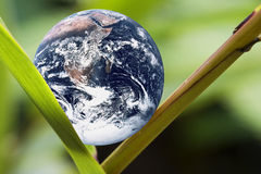 Planet Earth on Green Leaf. Image of planet earth on a green leaf portraying a living earth Royalty Free Stock Image
