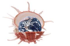 Planet Earth Sea Shell Macro Isolated Royalty Free Stock Image