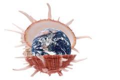 Planet Earth Sea Shell Macro Isolated. Isolated macro image of planet earth in a sea shell Royalty Free Stock Image