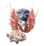 Planet Earth Sea Shell Macro Isolated. Isolated macro image of planet earth in a sea shell Stock Photography