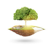 Planet earth and tree Stock Photos