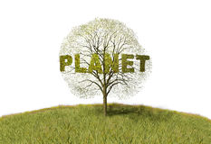 Planet text on a tree Royalty Free Stock Image