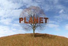 Planet text on a tree Royalty Free Stock Photos