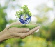 Planet und Baum in den menschlichen Händen auf grünem bokeh Hintergrund, Abwehr t Lizenzfreies Stockbild