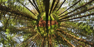 Planeta ambiental da floresta fotografia de stock royalty free