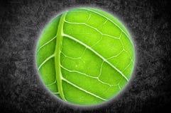 Planeta com textura da folha natural collage foto de stock royalty free