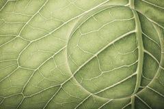 Planeta com textura da folha natural collage toned fotografia de stock royalty free