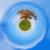 Planeta da árvore alaranjada sozinha do outono em um campo verde Fotografia de Stock Royalty Free