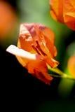 Planeta das flores Imagens de Stock Royalty Free