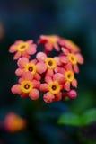 Planeta das flores Imagem de Stock Royalty Free