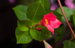 Planeta das flores Foto de Stock