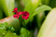 Planeta das flores Foto de Stock Royalty Free