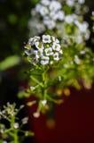 Planeta das flores Fotos de Stock