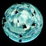 Planeta do Aqua Imagens de Stock Royalty Free