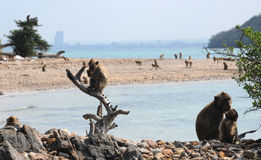 Planeta dos macacos Imagens de Stock Royalty Free
