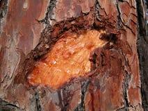 Planeta drzewa Zdjęcie Stock